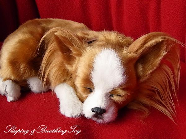 犬 イヌ 好評 いぬ ぬいぐるみ リアル 本物 そっくり 付与 ホワイト チワワ パーフェクトペット レッド ペット ロング