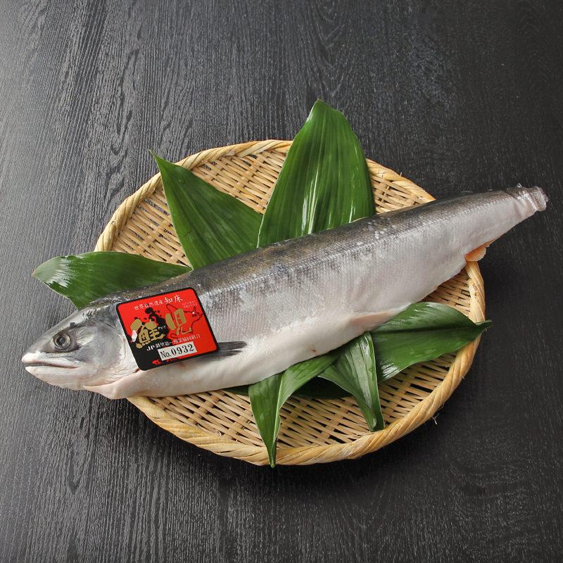送料無料 北海道 お取り寄せ 知床産 鮭児 ケイジ 生冷凍 半身 約800g~900g ルイベ刺身に
