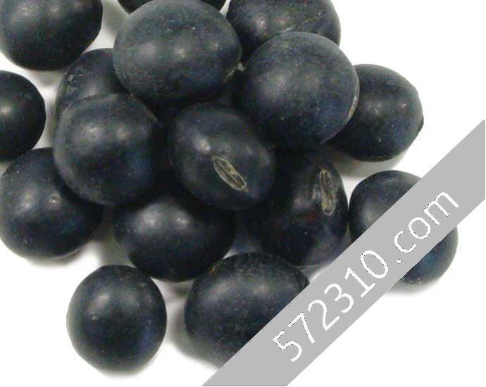ふるさと割 ■北海道産 本日の目玉 黒大豆 黒豆 中生いわいくろ種 生産者限定 300g 北海道産