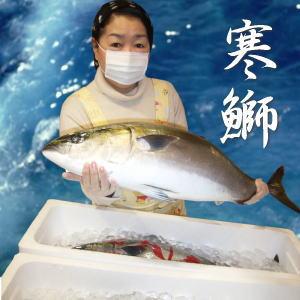 豊漁のお陰で最安値に挑戦中!天然寒ぶり1本(8kg前後)