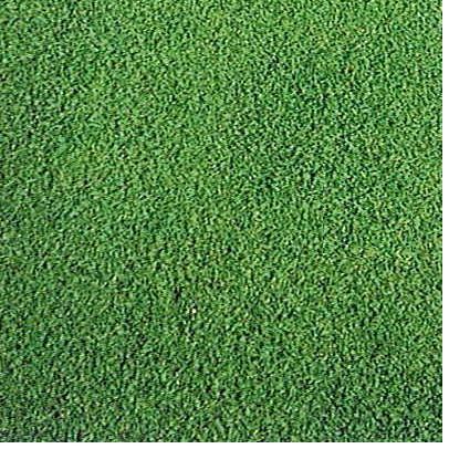 西洋芝の種A-1  720g 27坪(90平方メートル)分