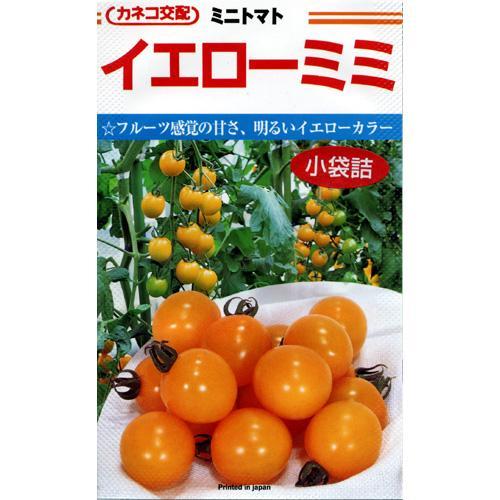 ミニトマト 種 【イエローミミ】 コート600粒 ( 種 野菜 野菜種子 野菜種 )