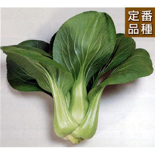 ちんげん菜 種 【 青帝 】 種子 2dl ( 種 野菜 野菜種子 野菜種 ) ★