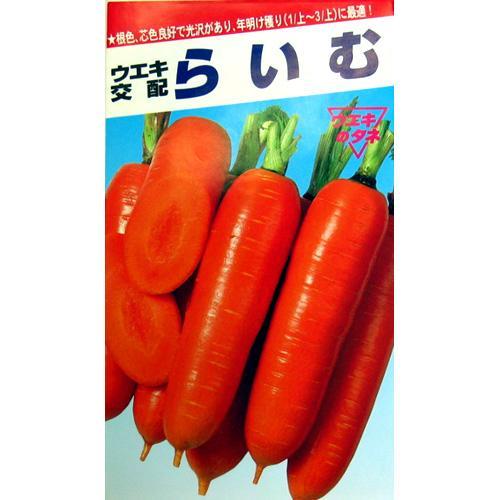 にんじん 種 【 らいむ五寸 】 種子 2dl缶 ( 種 野菜 野菜種子 野菜種 )