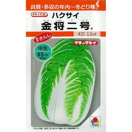 白菜 種 【 金将二号 缶 】 種子 1dl ( 種 野菜 野菜種子 野菜種 )