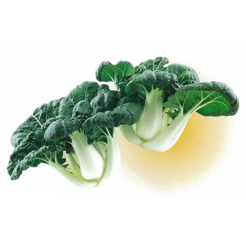 【 ミニパクチョイロンフー 】 種子 2dl ( 種 野菜 野菜種子 野菜種 )