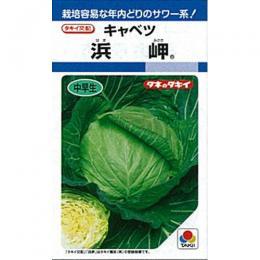 キャベツ 種 【 浜岬 】 種子 L5千粒 ( 種 野菜 野菜種子 野菜種 )