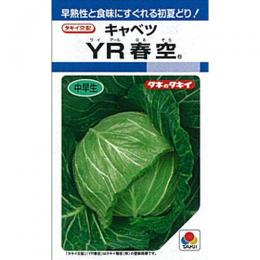 キャベツ 種 【 YR春空 】 種子 L5千粒 ( 種 野菜 野菜種子 野菜種 )