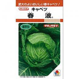 キャベツ 種 【 春波 】 種子 L5千粒 ( 種 野菜 野菜種子 野菜種 )