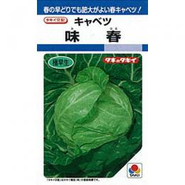 キャベツ 種 【 味春 】 種子 L5千粒 ( 種 野菜 野菜種子 野菜種 )