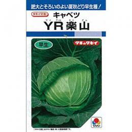 キャベツ 種 【 YR楽山 】 種子 L5千粒 ( 種 野菜 野菜種子 野菜種 )