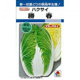 白菜 種 【 勝春 】 種子 L5千粒 ( 種 野菜 野菜種子 野菜種 )