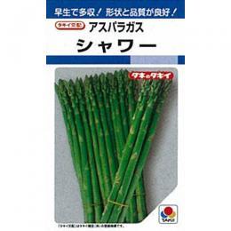 アスパラガス 種 【 シャワー 】 種子 1dl ( 種 野菜 野菜種子 野菜種 )