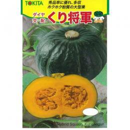 かぼちゃ 種 【くり将軍】 500粒 ( 種 野菜 野菜種子 野菜種 )