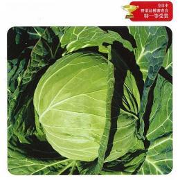 キャベツ 種 【 YR春ごころ (春系316) 】 種子 コート5千粒 ( 種 野菜 野菜種子 野菜種 )