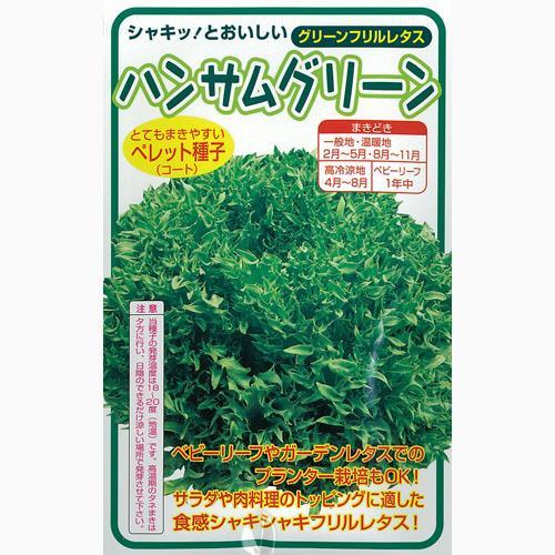 レタス 種 【 ハンサムグリーン 】 種子 Lコート五千粒ビン ( 種 野菜 野菜種子 野菜種 )