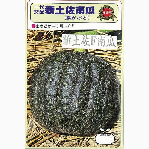 台木 種 【台木カボチャ】 1L ( 種 野菜 野菜種子 野菜種 )