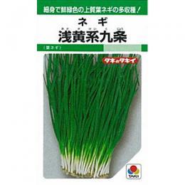 ネギ 種 【 浅黄系九条葱 】 種子 1L ( 種 野菜 野菜種子 野菜種 )