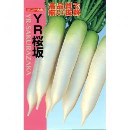 大根 種 【 YR-桜坂 】 種子 2dl ( 種 野菜 野菜種子 野菜種 )