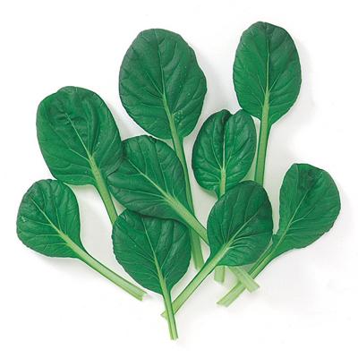 中原採種のベビーリーフシリーズ ベビーリーフ 種 2020モデル ターサイ 種子 野菜種子 1L 数量限定 野菜種 野菜