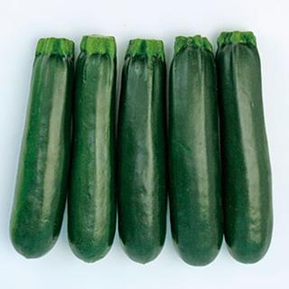 複数のウィルスに耐病性高品質で多収 価格 交渉 送料無料 ズッキーニ 種 ゼルダ ネロ 100粒 野菜種子 上品 野菜種 野菜