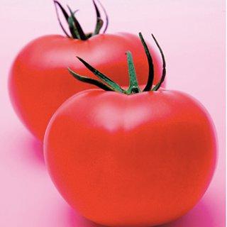 トマト 種 【 桃太郎ピース 】 1000粒 ( トマトの種 )