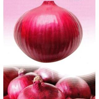 辛味少なく 生食に最適 たまねぎ 種 レッドグラマー 保証 2L 上質 ペレット5 野菜種 野菜 野菜種子 000粒