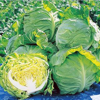 作りやすく おいしい春キャベツ キャベツ 種 ランキングTOP10 春波 野菜 野菜種子 日本最大級の品揃え 2000粒 野菜種 小袋