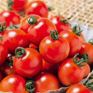 トマト 種 【 ミニトマト 千果99 】 ペレット1000粒 ( トマトの種 )