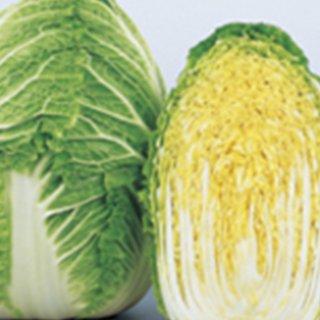 白菜 種 【 冬月90 】 ペレット5千粒 ( 白菜の種 )