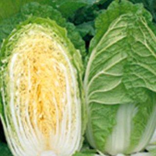 白菜 種 【 ゆめぶき506 】 ペレット5千粒 ( 白菜の種 )