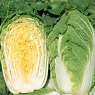 白菜 種 【 さとぶき622 】 ペレット5千粒 ( 白菜の種 )