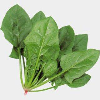高い素材 晩夏 秋 冬 早春まき用 ホウレンソウ 種 1L ホウレンソウの種 アトラス 売り込み