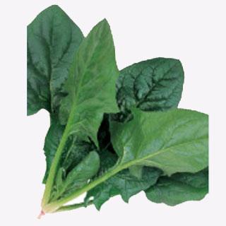 直営限定アウトレット 萎凋病に対し強い耐病性 ほうれん草 種 流行 ミラージュ 野菜 野菜種子 M3万粒 野菜種