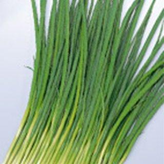 低温でもよく伸び SALE開催中 細葉で濃緑の小ねぎ ネギ 種 1L 緑秀 おてがる小ねぎ お値打ち価格で ネギの種