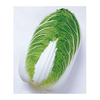 白菜 種 【 金将 】 1dl缶 ( 白菜の種 )