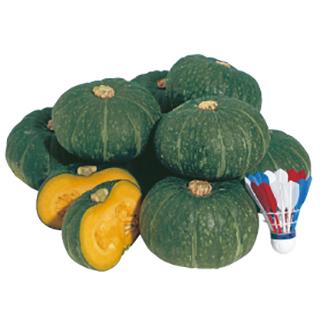 かぼちゃ 種 【ほっこり姫】 500粒 ( 種 野菜 野菜種子 野菜種 )