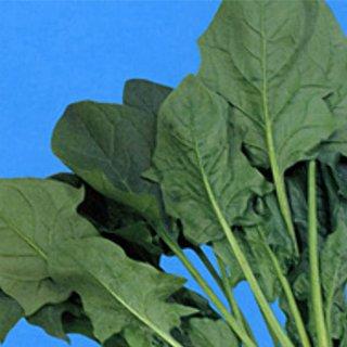 ベト病R1~7に抵抗性 ホウレンソウ 種 タキシード7 特価キャンペーン 流行のアイテム M3万粒 ホウレンソウの種