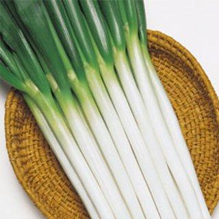 限定タイムセール 食味上々の合柄系良質多収種 ネギ 種 日本全国 送料無料 2L5千粒 ホワイトスター ネギの種