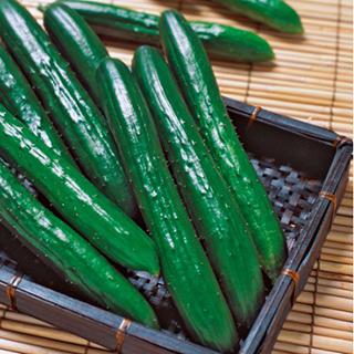 キュウリ 種 【 VR夏すずみ 】 350粒 ( キュウリの種 )