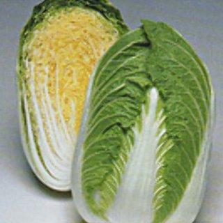 白菜 種 【 きらぼし80 】 L5千粒 ( 白菜の種 )