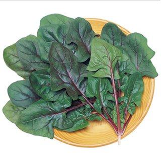 最新アイテム 栽培容易な赤軸ホウレンソウ ホウレンソウ 種 1L 早生サラダあかり 保証 ホウレンソウの種