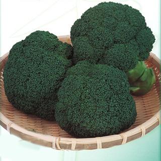 値下げ 低温伸長性にすぐれる中早生品種 ブロッコリー 数量限定アウトレット最安価格 種 おはよう 野菜 2000粒 野菜種子 野菜種