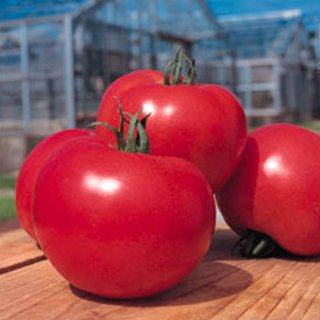 トマト 種 【 桃太郎ヨーク 】 ペレット2L千粒 ( トマトの種 )