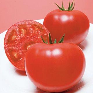 トマト 種 【 CF桃太郎J 】 2000粒 ( トマトの種 )