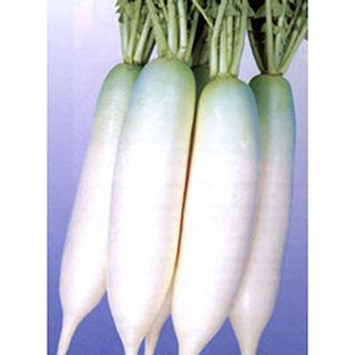 大根 種 【 栄福2号 】 種子 2dl ( 種 野菜 野菜種子 野菜種 )