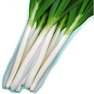 ネギ 種 【 ネギ石倉エース 】 種子 1L ( 種 野菜 野菜種子 野菜種 )