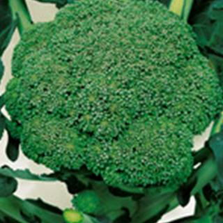 ブロッコリー 種 【 緑嶺 】 ペレット5千粒 ( ブロッコリーの種 )