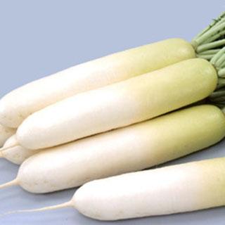 大根 種 【 冬しぐれ 】 種子 2dl缶 ( 種 野菜 野菜種子 野菜種 )