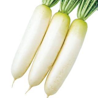 大根 種 【 晩抽春づまり 】 種子 2dl ( 種 野菜 野菜種子 野菜種 )